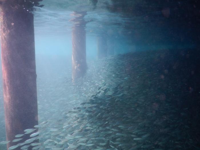 Wall o' fish.